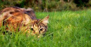 Killer Kats