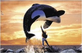 Freedom for Orcas