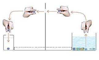 Wrinkly fingers experiment. Source: Kareklas K et al. Biol. Lett. 2013;9:20120999