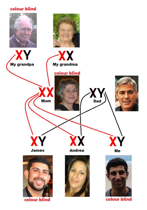 Colourblindness genealogy